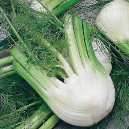 Fennel Di Firenze