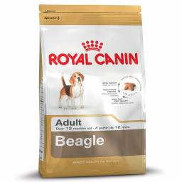 Canin Dog Beagle Adult