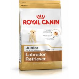 Canin Dog Labrador 33 Junior
