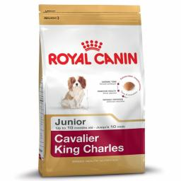 Canin Dog Cavalier King Charles Junior