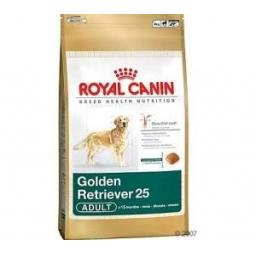 Canin Dog Golden Retriever 25