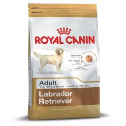 Canin Dog Labrador Retriever 30