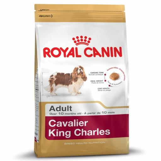 Canin Dog Cavalier King Charles 27