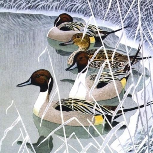 Christmas Cards Pintail Ducks Pack 5