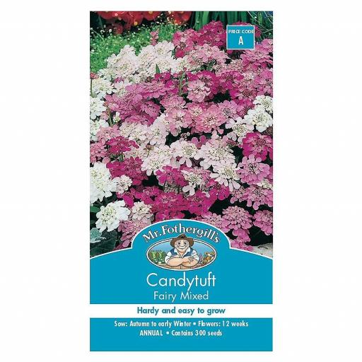 Candy Tuft Fairy Mixed