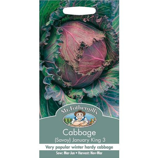Cabbage Savoy January King 3
