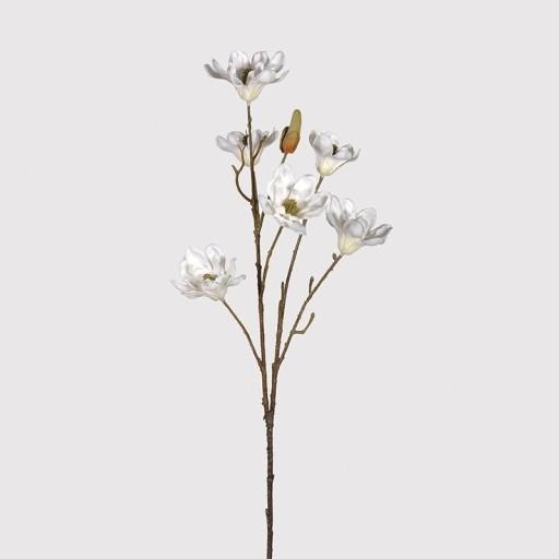 Cream Magnolia Spray