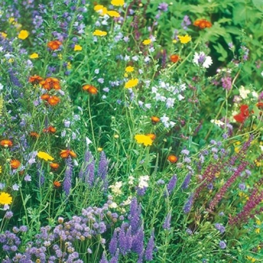 Wildflowers Wildlife Mixture