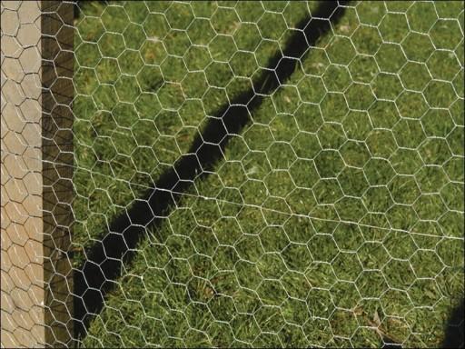 Galvanised Wire Netting 900mm x 25mm x 5m